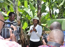 A female scientist in a banana plantation is filmed and interviewed.